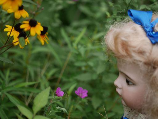 野の花を見るアリス.jpg